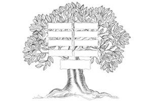 albero genealogico diritto della famiglia e delle successioni